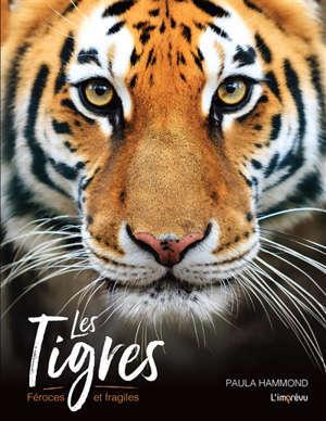 Les tigres : féroces et fragiles