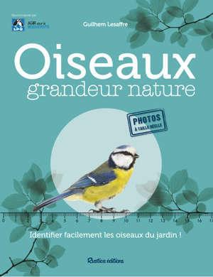 Oiseaux grandeur nature : identifier facilement les oiseaux du jardin !