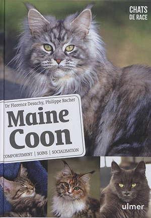 Maine coon : comportement, soins, socialisation