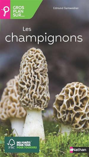 Gros plan sur... les champignons