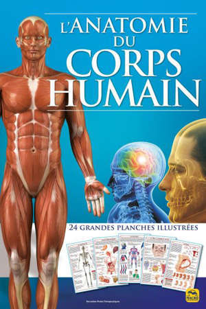 L'anatomie du corps humain : 24 grandes planches illustrées